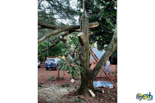 Homem é atingido na cabeça durante poda de árvores e morre