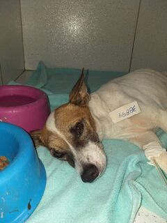 Servidora socorre cãozinho ferido, mas tratamento é caro e apela por doações no Nova Bahia