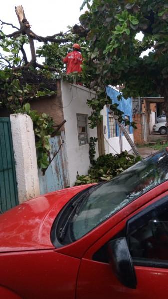 Após temporal, bombeiros atendem ocorrências de queda de árvores em Corumbá