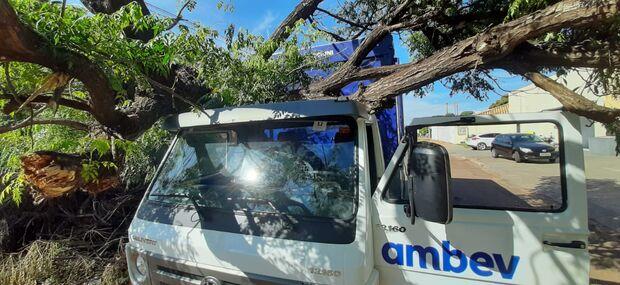 ATRASOU A ENTREGA DA CERVEJA: árvore cai em caminhão de bebidas na Vila Margarida