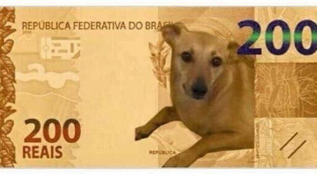 Banco Central estuda ação por vira-lata Caramelo após pedido para estampar nota de R$ 200
