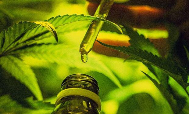 Mesmo com liberação da Anvisa, Brasil tem apenas um medicamento à base de cannabis