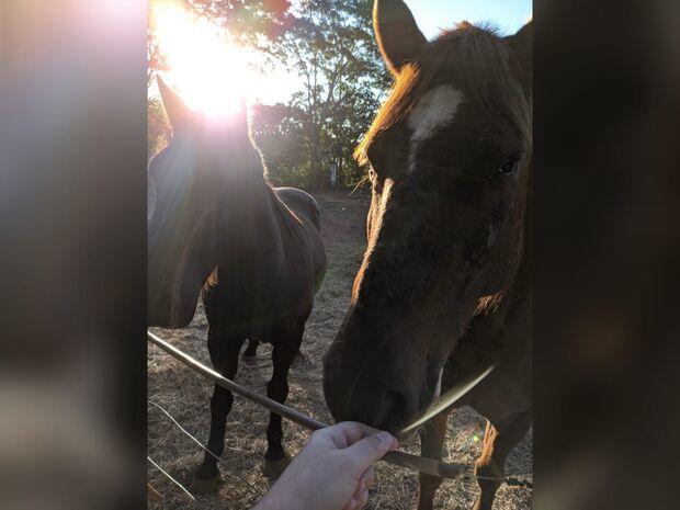Bandidos não perdoam nem cavalos em Corumbá