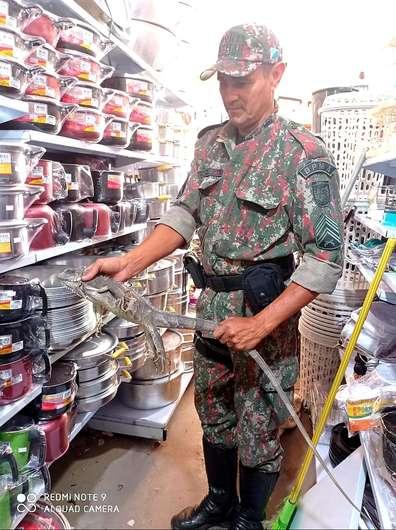 Iguana vai parar em prateleira de loja e só PMA para resgatar