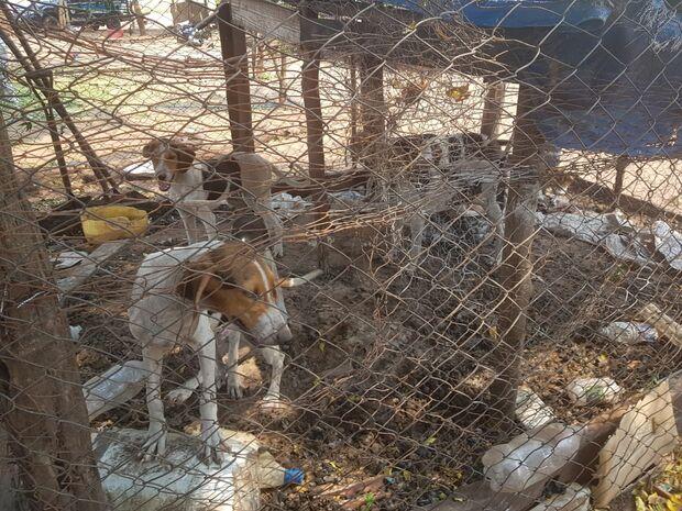 Após um ano de salvamento de cães, ONG questiona descaso e impunidade