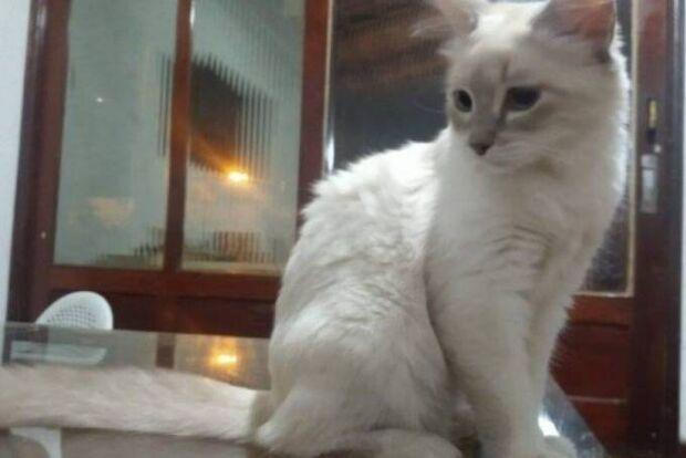 Brasil tem o primeiro caso oficial de covid-19 em animal; gata vive em Cuiabá