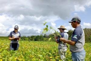 Aprosoja/MS abre a colheita da safra 2013/14 nesta terça