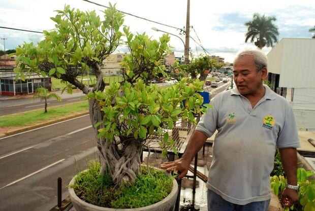 Mestre ensina a arte de fazer um bonsai durar