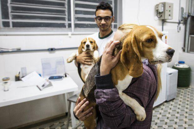 Cães resgatados em instituto sofriam maus-tratos, diz OAB