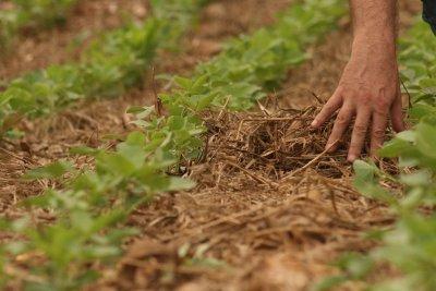 Produtores em MS plantam média de 30 mil hectares de soja diariamente