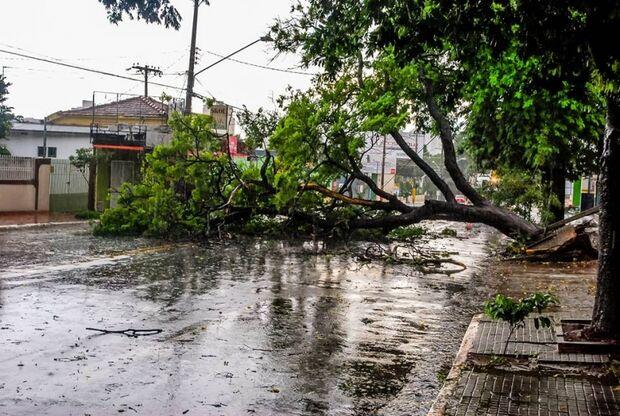 Chuva forte derruba árvores e prejudica fornecimento de energia na Capital