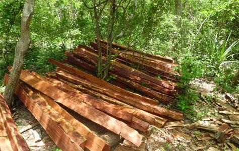 PMA autua fazendeira por exploração ilegal de madeira protegida por lei