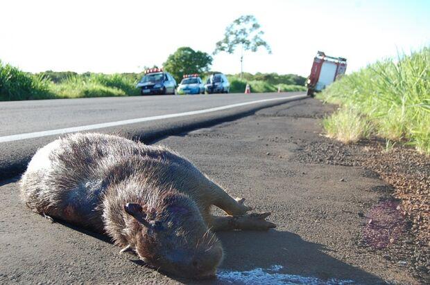 Motorista morre após colidir carro contra animal silvestre na MS-480