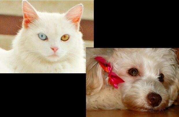 A partir de agora, cães e gatos poderão tirar passaporte