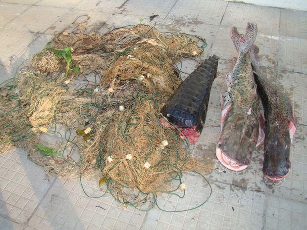 PMA supreende pescadores e apreende peixes, jacaré e rede de pesca