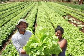 Dourados sedia em dezembro 1º Encontro nacional da Agricultura Familiar