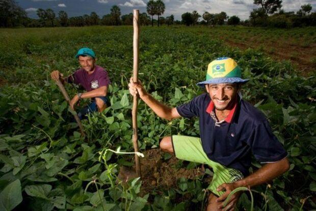 Agricultores brasileiros já contrataram R$ 38,6 bilhões da safra 2013/2014