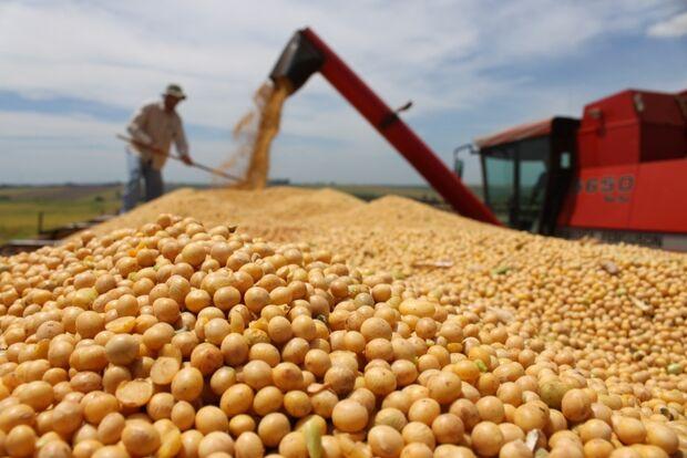 Conab registra queda nas exportações de soja em outubro