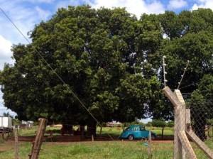Criança morre após cair de árvore em Batayporã