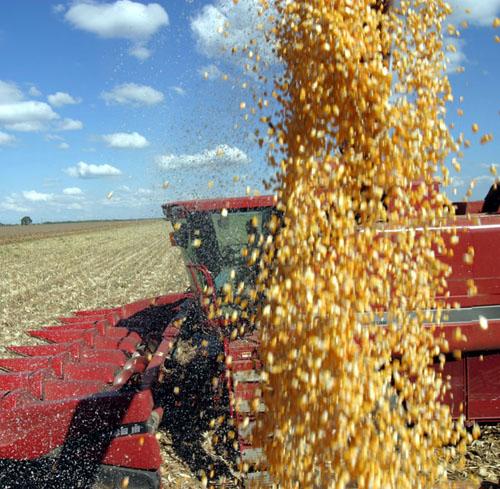 Produção de milho teve altos e baixos, mas tem projeções otimistas para 2014