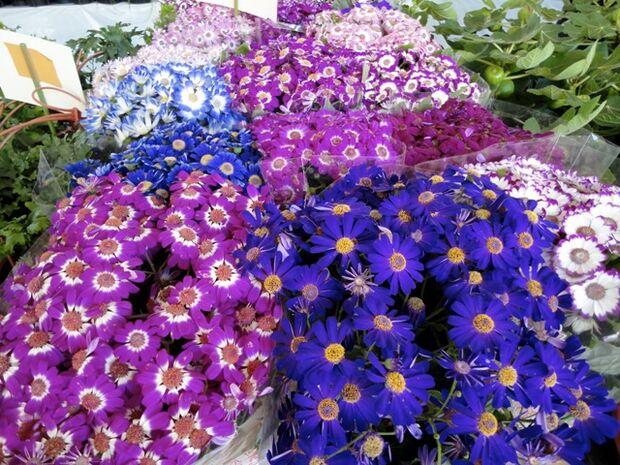 Festival terá mais de 200 variedades de flores e plantas