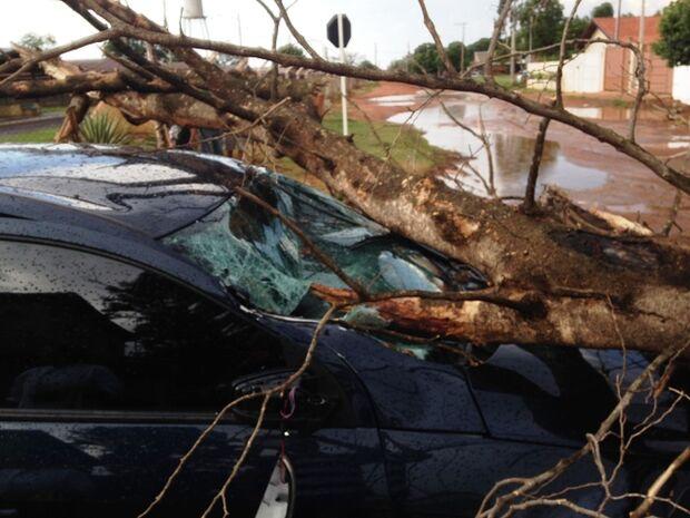 Árvore cai em cima de carro em movimento e motorista sai ilesa