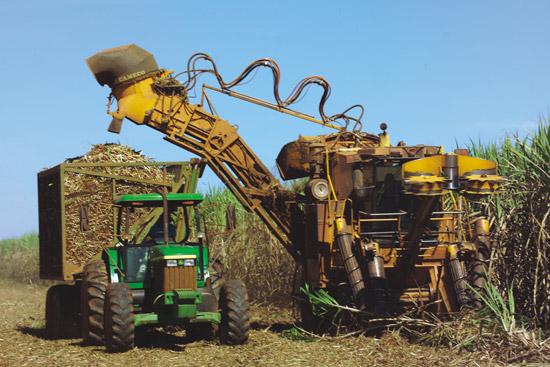 Pesquisa revela que dois municípios de MS estão entre os maiores produtores de cana