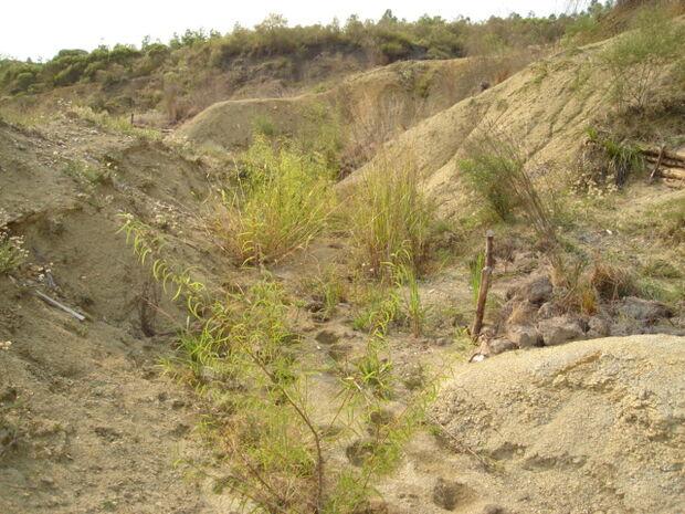 Recuperação de áreas degradadas em Rio Verde valorizou propriedades em até 200%