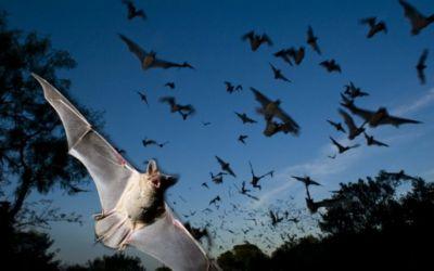 Simpósio na Capital debate manejo dos morcegos nas cidades