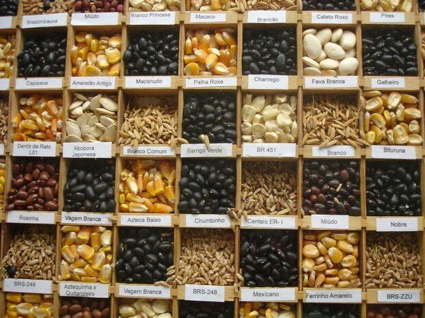 Projeto sobre tecnologia que pode tornar sementes estéreis avança na Câmara