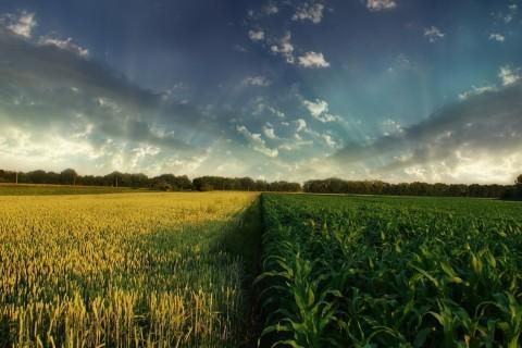 Mudanças climáticas podem causar perdas de R$ 7,4 bilhões para agricultura, diz relatório