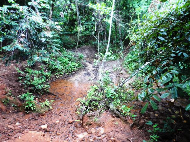 PMA multa fazendeiro em R$ 5mil durante fiscalizaçã em Costa Rica