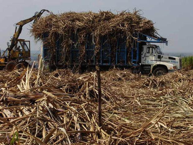 Região Centro-Sul tem aumento de 21% no processamento de cana-de-açúcar