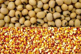 Soja, milho e cana puxaram o PIB da agropecuária do país em 2013