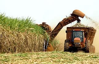 Produção de cana apresenta queda na primeira quinzena de outubro