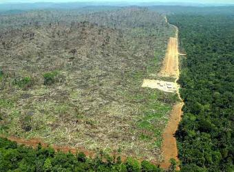Petrobras destina mais de R$ 110 milhões para preservação da biodiversidade na Amazônia