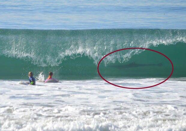 Mulher flagra tubarão em onda ao fotografar filho surfando
