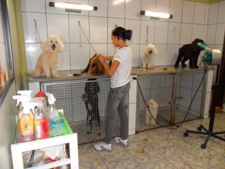 Uniforme Pet Shop