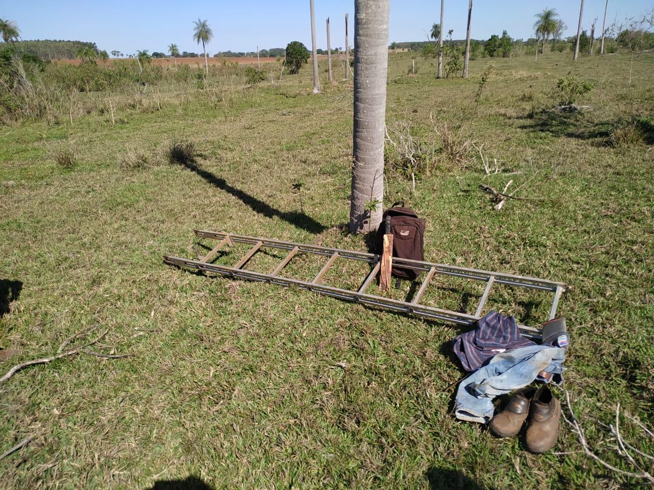 PMA e Ibama surpreendem traficantes tentando retirar de filhotes de papagaios dos ninhos - Top Mídia News